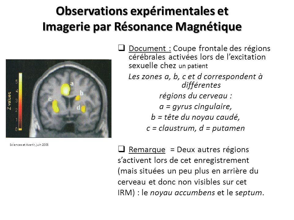 Observations expérimentales et Imagerie par Résonance Magnétique Document : Coupe frontale des régions cérébrales activées lors de lexcitation sexuell
