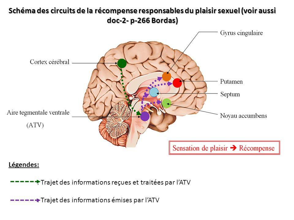 Schéma des circuits de la récompense responsables du plaisir sexuel (voir aussi doc-2- p-266 Bordas) Légendes: : Trajet des informations reçues et tra