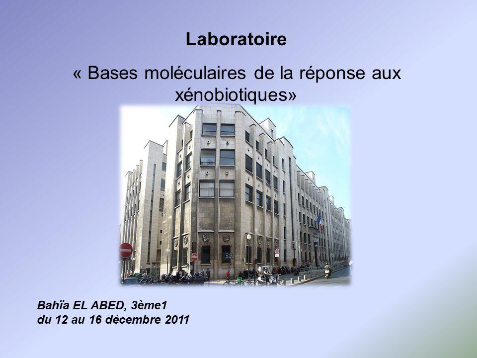 Laboratoire « Bases moléculaires de la réponse aux xénobiotiques» Bahïa EL ABED, 3ème1 du 12 au 16 décembre 2011