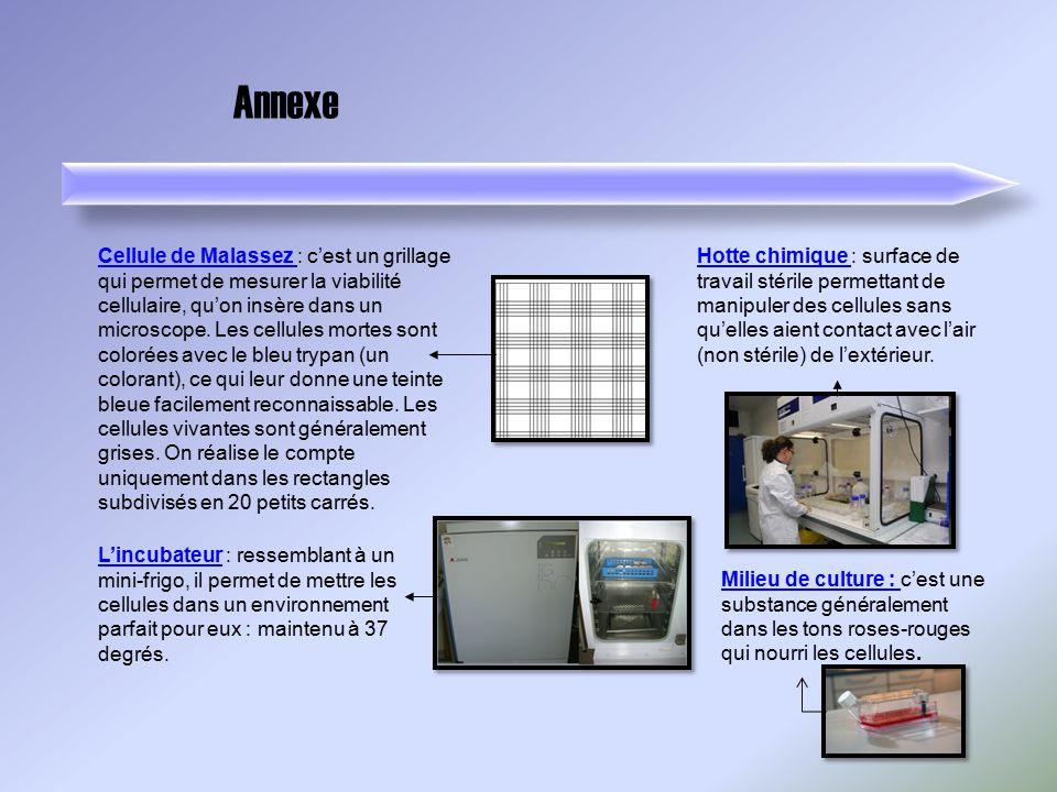 Annexe Cellule de Malassez Cellule de Malassez : cest un grillage qui permet de mesurer la viabilité cellulaire, quon insère dans un microscope. Les c