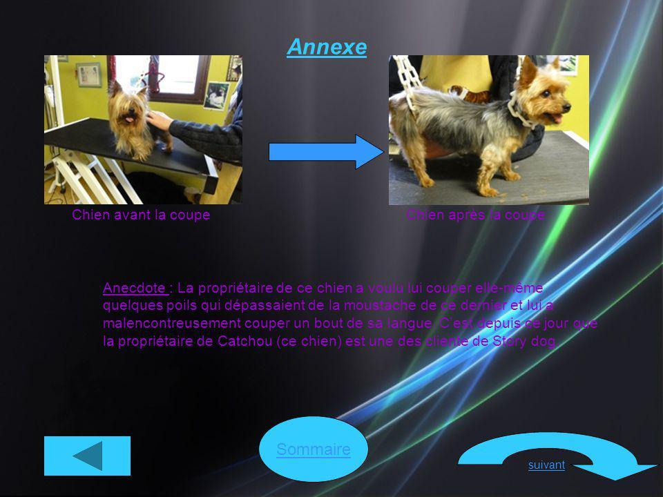 Sommaire suivant Annexe Chien avant la coupeChien après la coupe Anecdote : La propriétaire de ce chien a voulu lui couper elle-même quelques poils qu