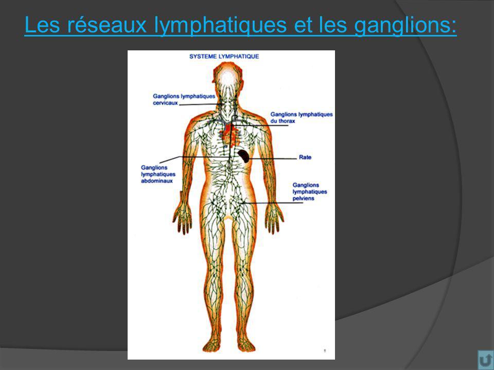 Les réseaux lymphatiques et les ganglions:
