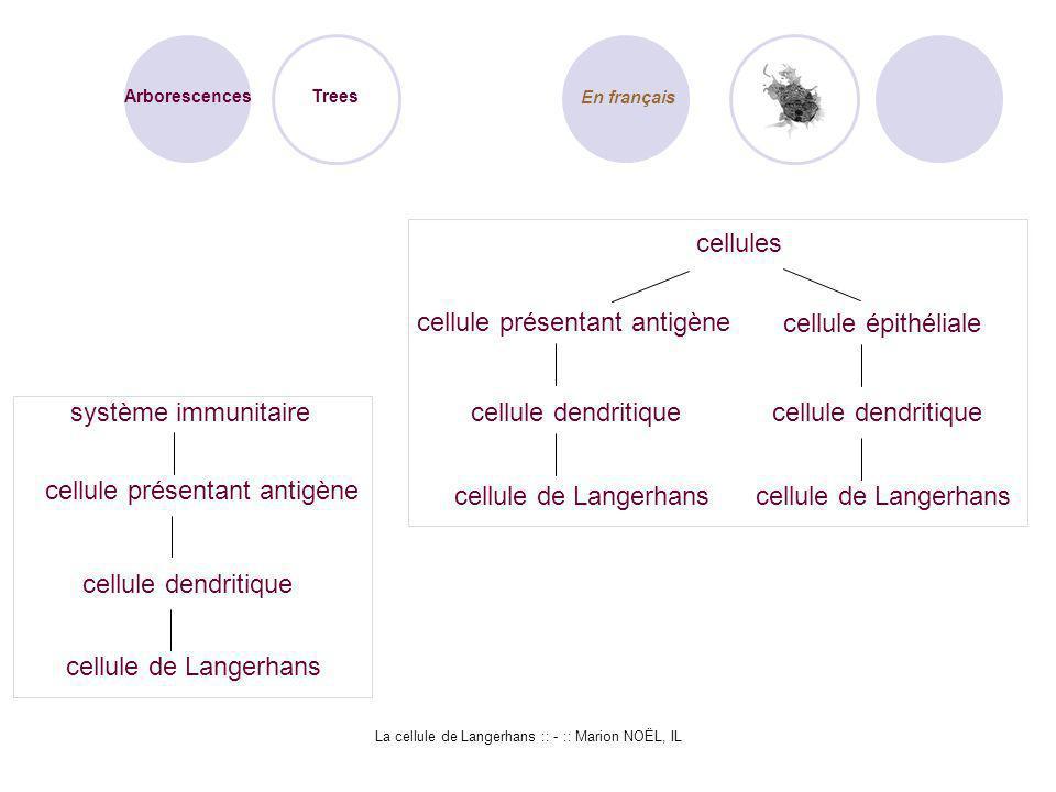 La cellule de Langerhans :: - :: Marion NOËL, IL Arborescences Trees En français système immunitaire cellule présentant antigène cellule dendritique c