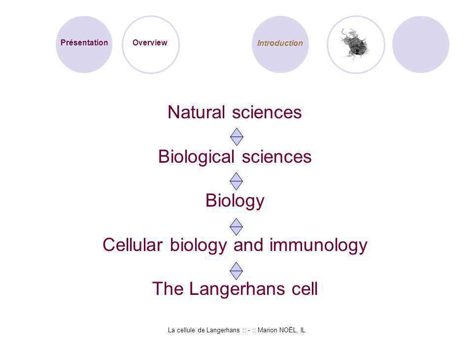 La cellule de Langerhans :: - :: Marion NOËL, IL Natural sciences Biological sciences Biology Cellular biology and immunology The Langerhans cell Prés