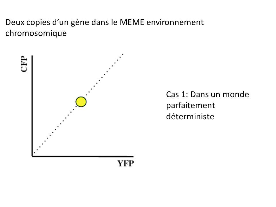 Cas 1: Dans un monde parfaitement déterministe Deux copies dun gène dans le MEME environnement chromosomique