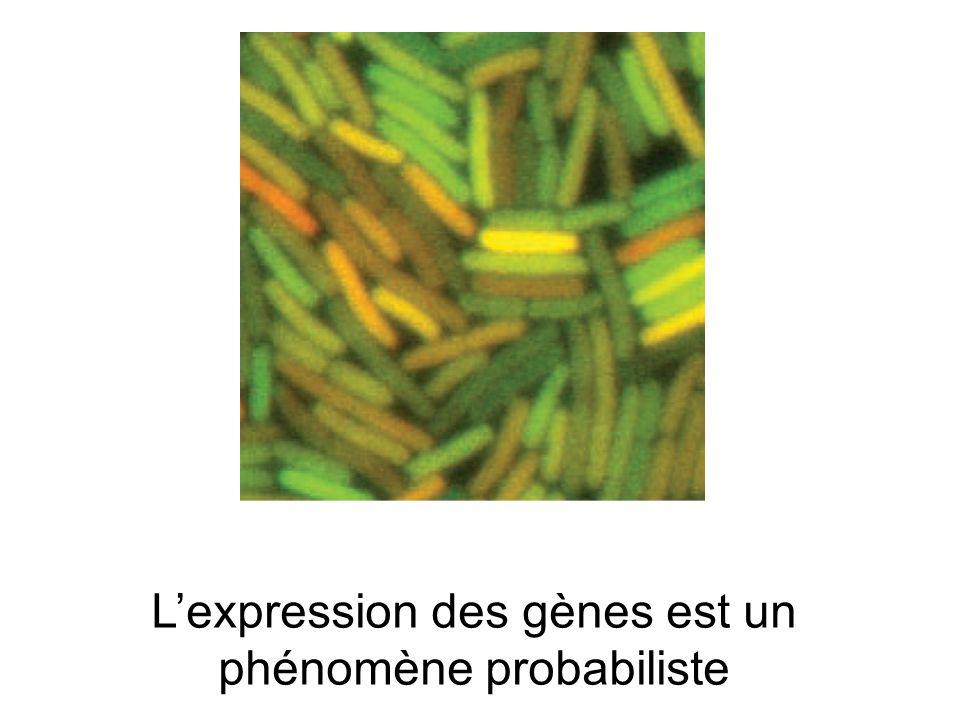 Lexpression des gènes est un phénomène probabiliste