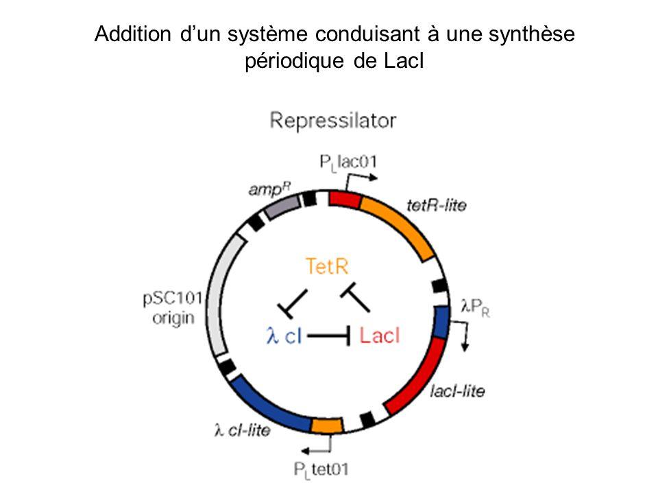 Addition dun système conduisant à une synthèse périodique de LacI
