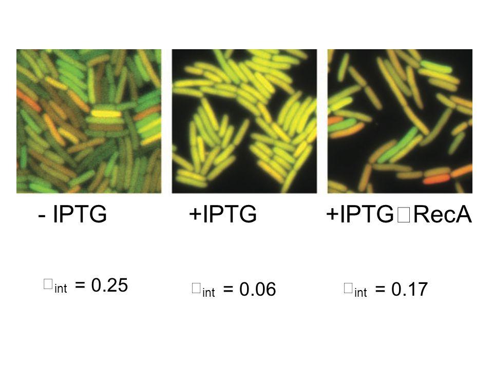 - IPTG +IPTG +IPTG RecA int = 0.25 int = 0.06 int = 0.17