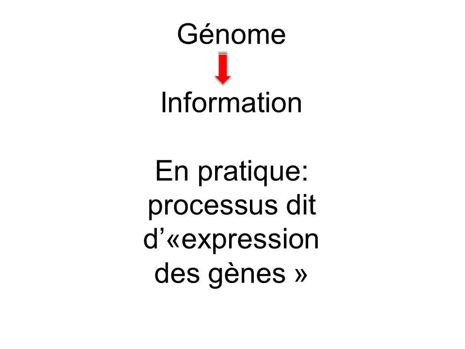 Génome Information En pratique: processus dit d«expression des gènes »