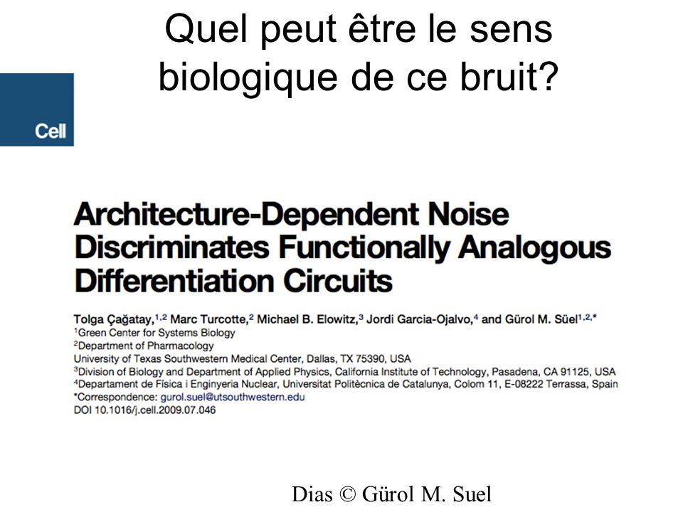 Dias © Gürol M. Suel Quel peut être le sens biologique de ce bruit?