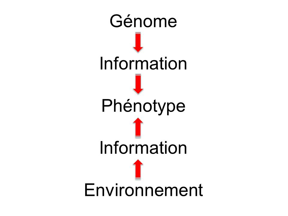 Génome Information Phénotype Information Environnement
