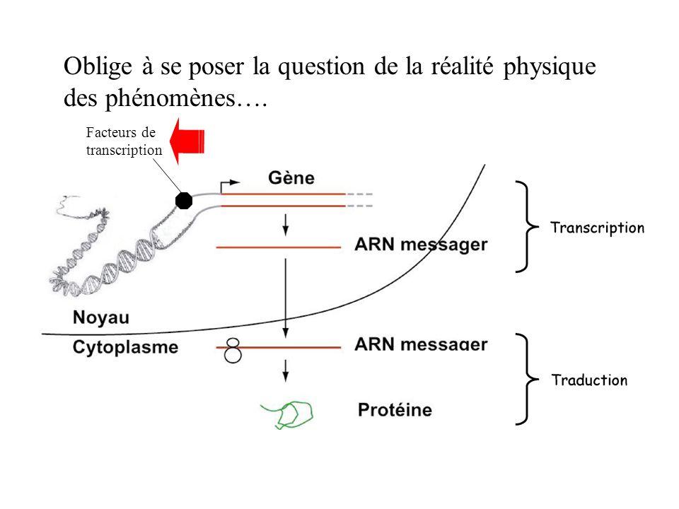 Facteurs de transcription Oblige à se poser la question de la réalité physique des phénomènes….