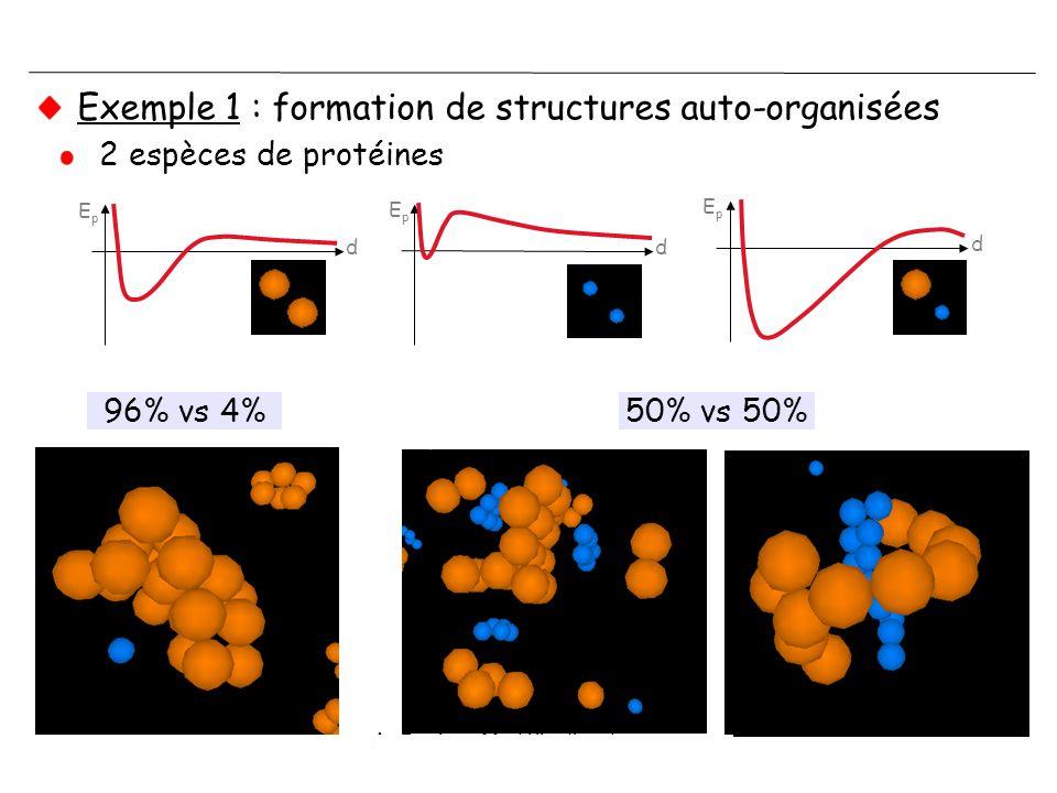 A. Coulon - Modélisation de corps nucléaires - IPG - 29/11/2006 Exemple 1 : formation de structures auto-organisées 2 espèces de protéines d EpEp d d
