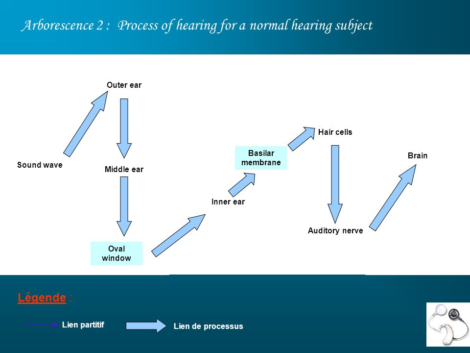 Arborescence 2 : Process of hearing for a normal hearing subject Légende : Sound wave Outer ear Middle ear Inner ear Brain Hair cells Auditory nerve Lien partitif Lien de processus Oval window Basilar membrane