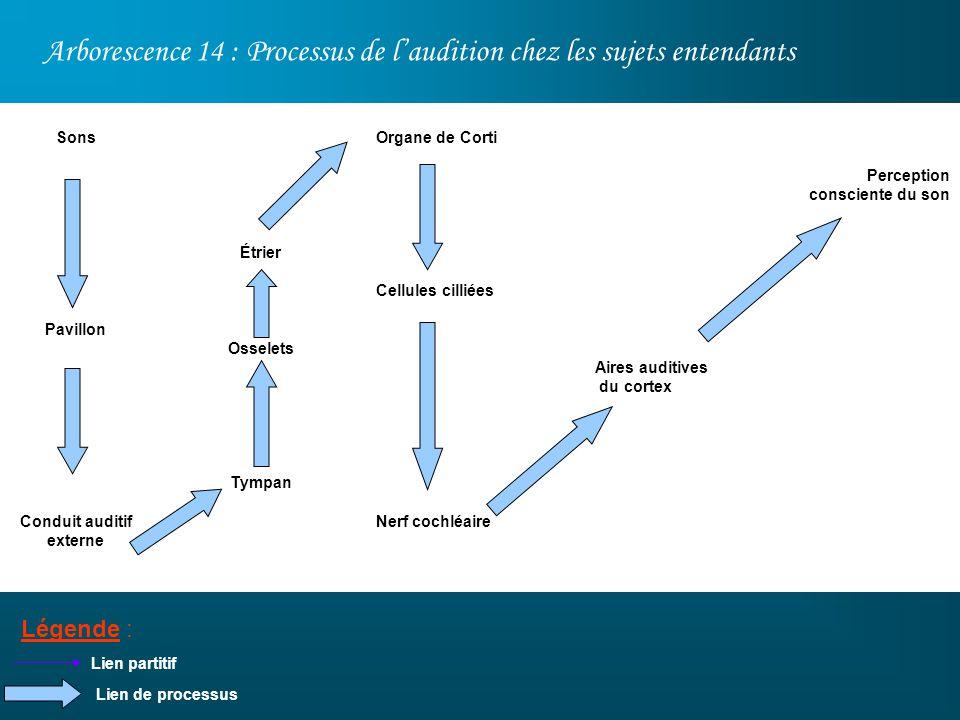 Arborescence 14 : Processus de laudition chez les sujets entendants Légende : Sons Pavillon Conduit auditif externe Lien partitif Étrier Osselets Tymp