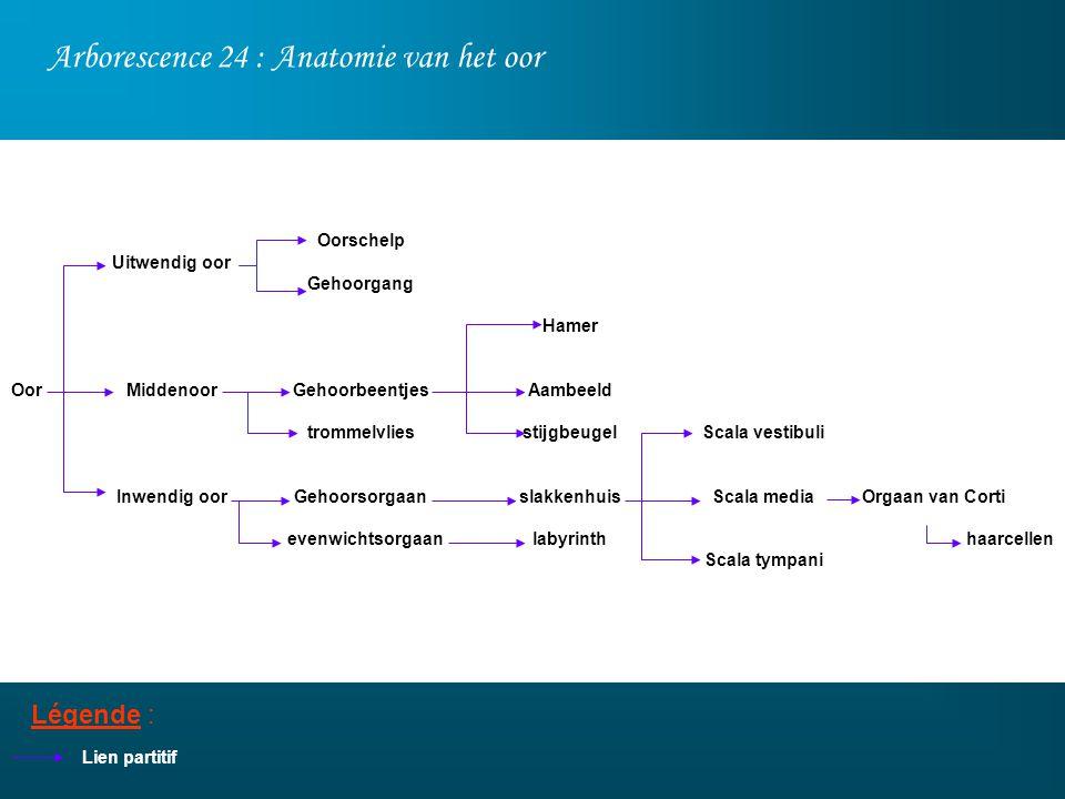 Arborescence 24 : Anatomie van het oor Légende : Lien partitif Uitwendig oor Middenoor Inwendig oor Oorschelp Gehoorgang Gehoorbeentjes trommelvlies G