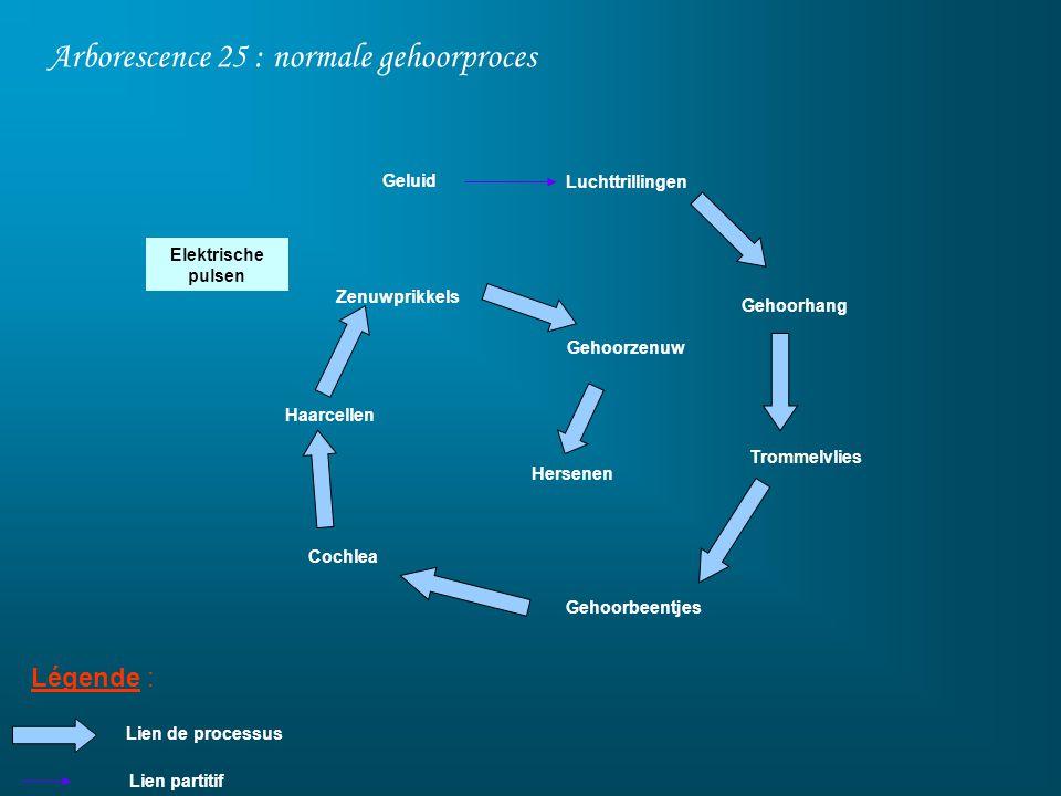 Arborescence 25 : normale gehoorproces Légende : Luchttrillingen Gehoorhang Gehoorbeentjes Geluid Cochlea Trommelvlies Lien de processus Haarcellen Ze