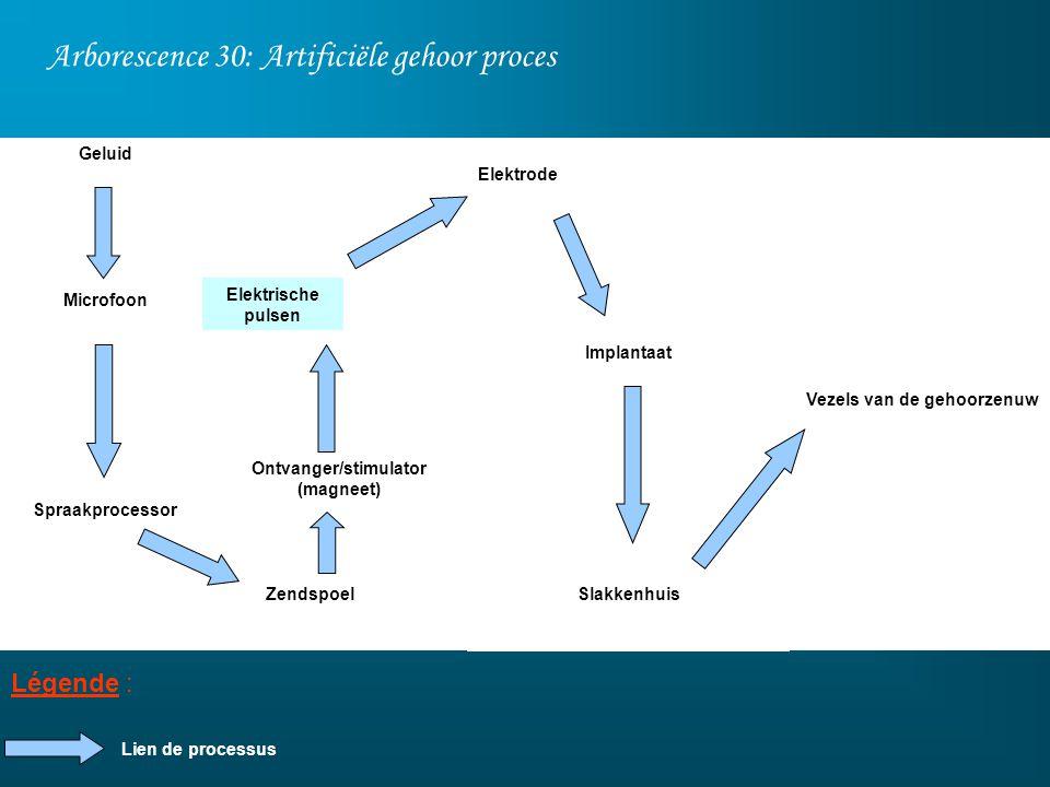 Arborescence 30: Artificiële gehoor proces Légende : Geluid Microfoon Spraakprocessor Ontvanger/stimulator (magneet) Zendspoel Elektrode Implantaat Sl