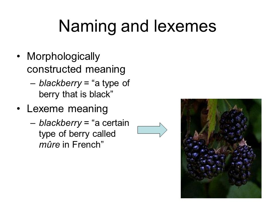 Naming and lexemes Morphologically constructed meaning –blackberry = a type of berry that is black Lexeme meaning –blackberry = a certain type of berr