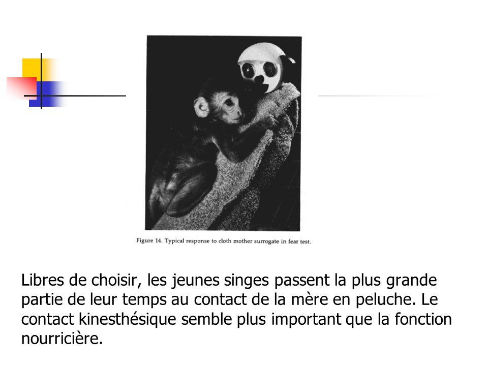 Quest ce que lattachement ? The Nature of Love Harry F. Harlow (1958) Des singes nouveaux-nés sont séparés de leur mère et élevés en présence de subst