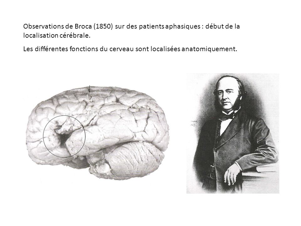 Phylogenèse du langage Evidemment, plus personne ne peut témoigner Autre solution : rassembler un faisceau de présomptions… Le langage est un comportement complexe, nécessitant le développement de capacités cognitives évoluées, et donc dun cortex bien développé