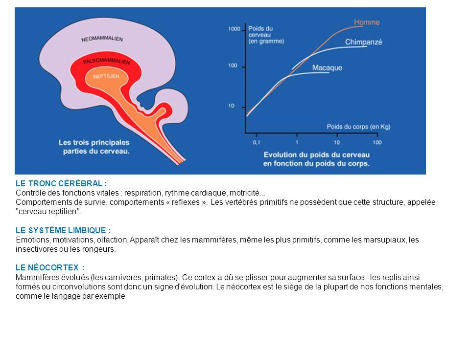 Pour évaluer les capacités corticales : - moulages (quotient dencéphalisation) - canal hypoglossal (contrôle de la langue)