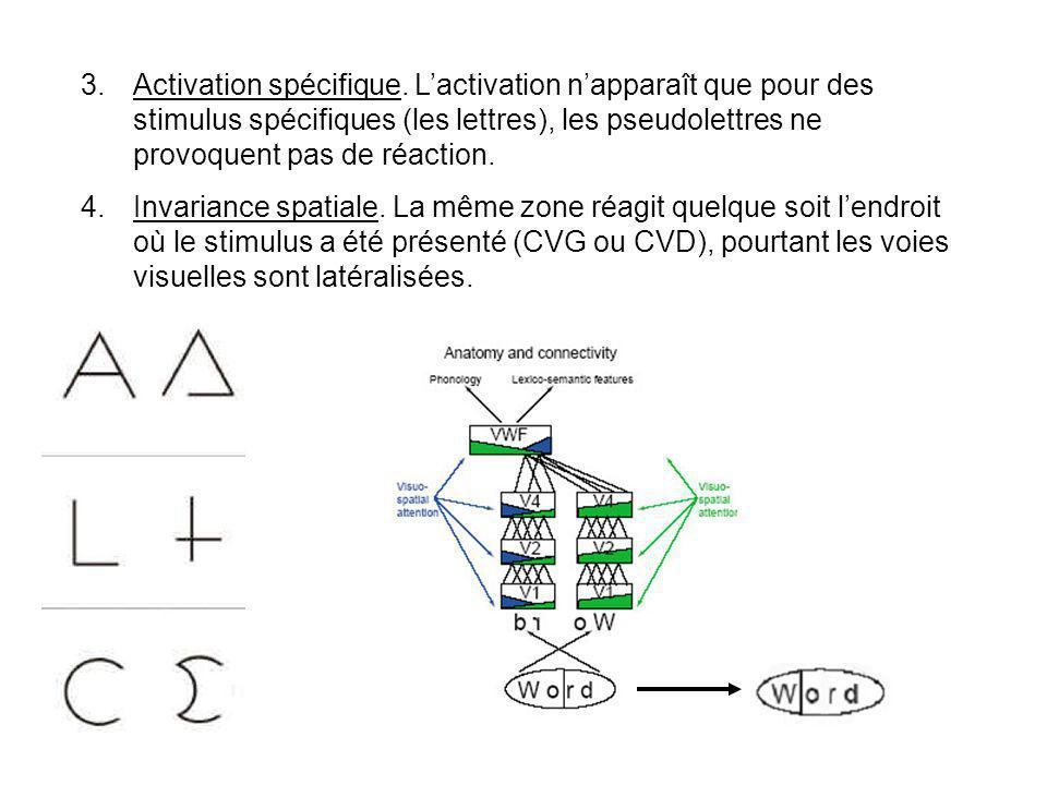 1.Spécificité modale. La région répond spécifiquement aux stimulus visuel, et non pas à des stimulus linguistiques en général (auditifs par exemple).