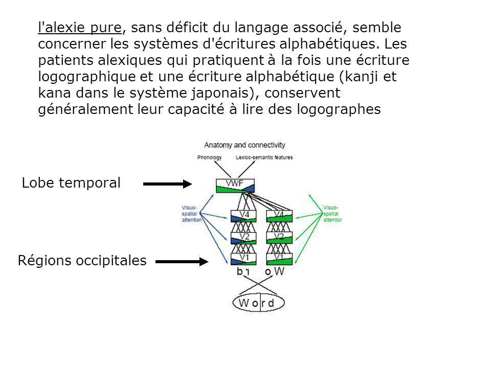 l alexie pure, sans déficit du langage associé, semble concerner les systèmes d écritures alphabétiques.