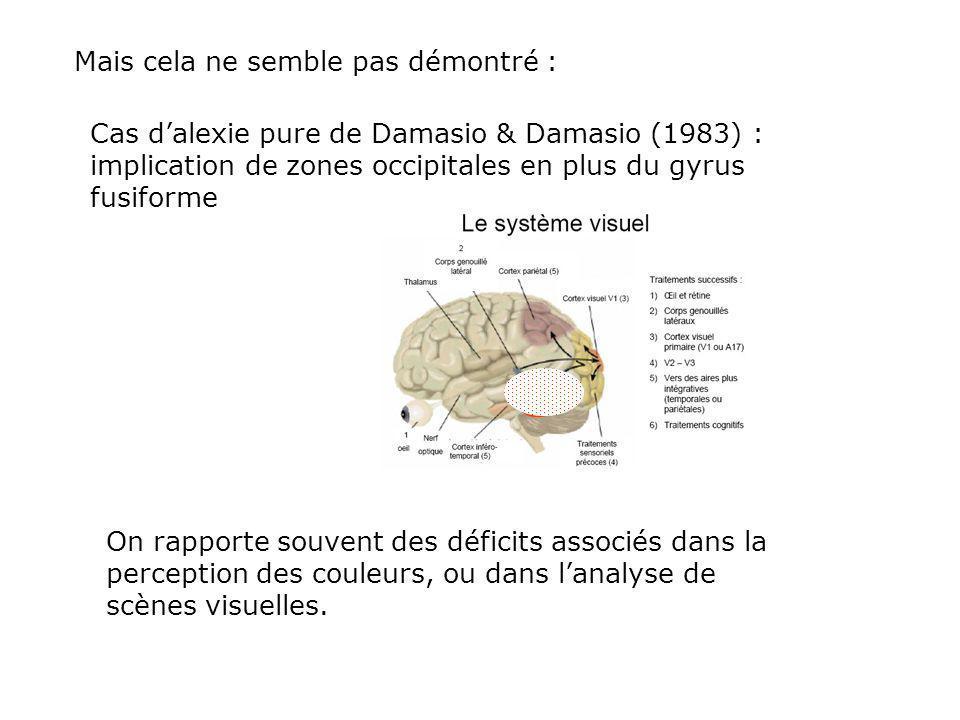 Mais cela ne semble pas démontré : Cas dalexie pure de Damasio & Damasio (1983) : implication de zones occipitales en plus du gyrus fusiforme On rapporte souvent des déficits associés dans la perception des couleurs, ou dans lanalyse de scènes visuelles.