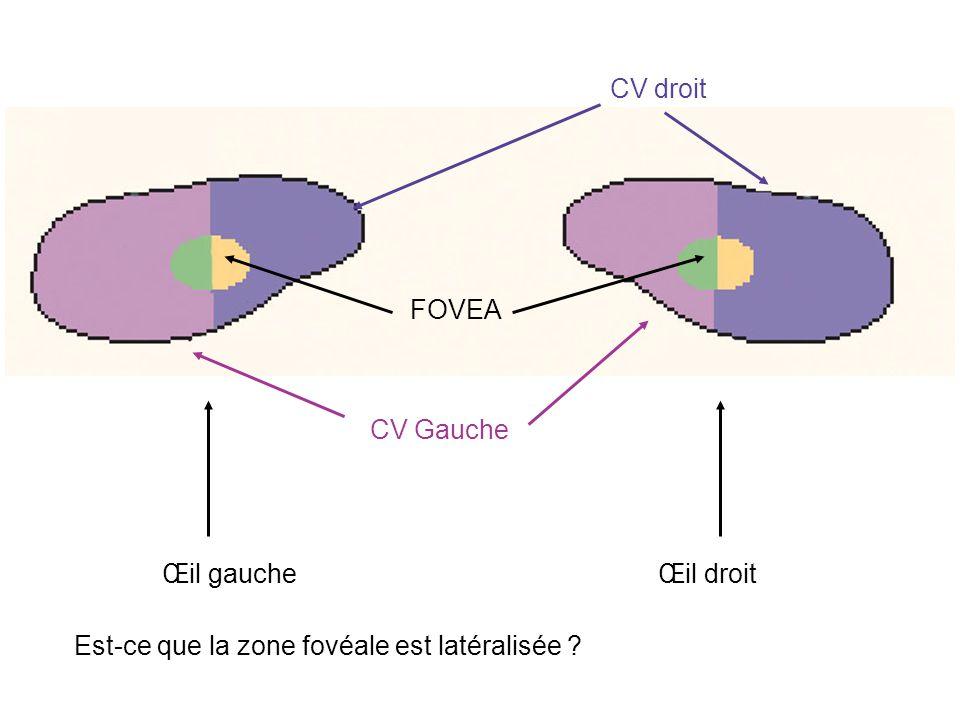 Œil droitŒil gauche CV droit CV Gauche FOVEA Est-ce que la zone fovéale est latéralisée ?
