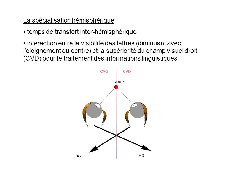 La spécialisation hémisphérique temps de transfert inter-hémisphérique interaction entre la visibilité des lettres (diminuant avec l'éloignement du ce