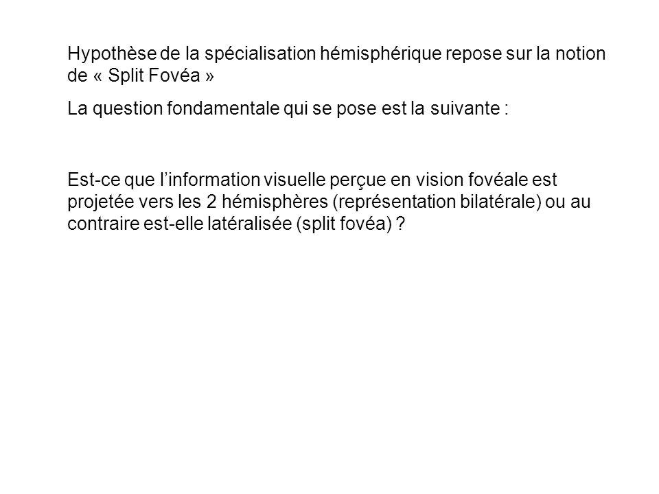 Hypothèse de la spécialisation hémisphérique repose sur la notion de « Split Fovéa » La question fondamentale qui se pose est la suivante : Est-ce que