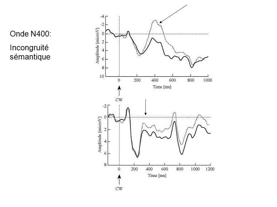 Rétine Accès lexical Compréhension perception mémoire Décision lexicale : 500 ms Catégorisation : 1000 ms Fixation oculaire : 250 ms Effet de la fréquence sur les fixations Onde N150 (fréquence, contrainte)