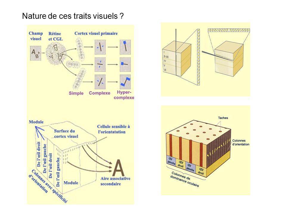 Théorie des traits visuels : chaque forme peut être décomposée en traits élémentaires décomposition de la forme en éléments constitutifs puis comparaison avec une liste stockée les traits distinctifs permettent de différencier les stimulus les uns des autres différenciation sur la base dun petit ensemble de traits visuels
