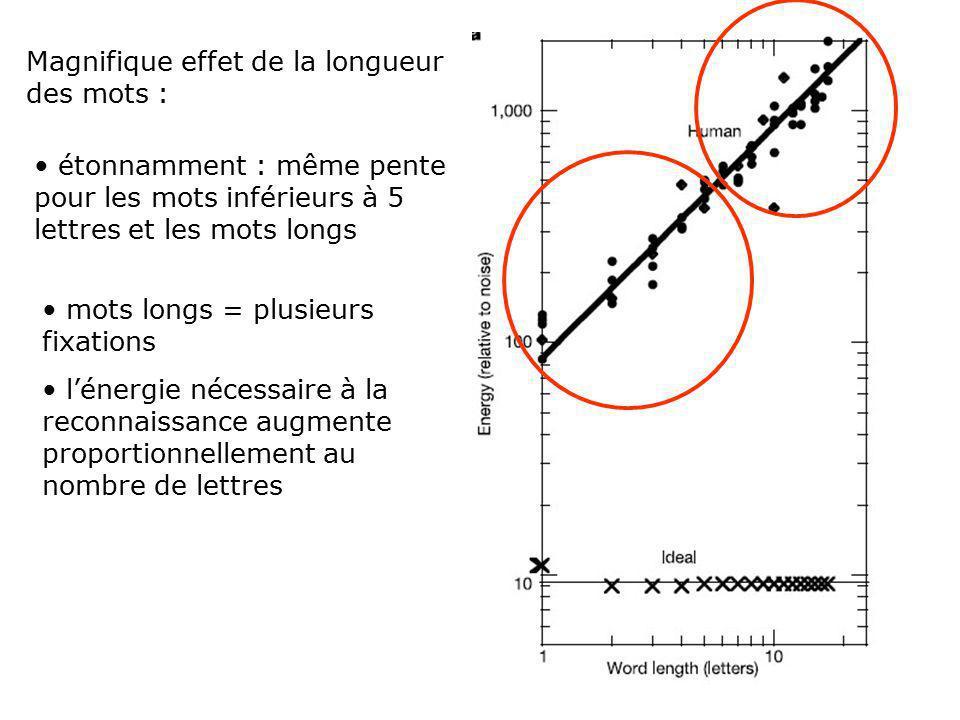 Les 2 conceptions perception de stimuli faiblement contrastés : Par gabarit : gabarit stocké comparé au mot on calcule une corrélation entre les 2 Les neurones des aires visuels peuvent être entraînés Plus il y a de lettres, plus il y a de points appariés, plus la reconnaissance est facile plus il y a de lettres, plus les contrastes peuvent être faibles lefficacité doit augmenter en fonction du nombre de lettres Traits visuels Chaque lettre à besoin dun niveau dénergie suffisant pour être identifiée