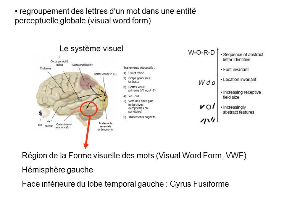 Région de la Forme visuelle des mots (Visual Word Form, VWF) Hémisphère gauche