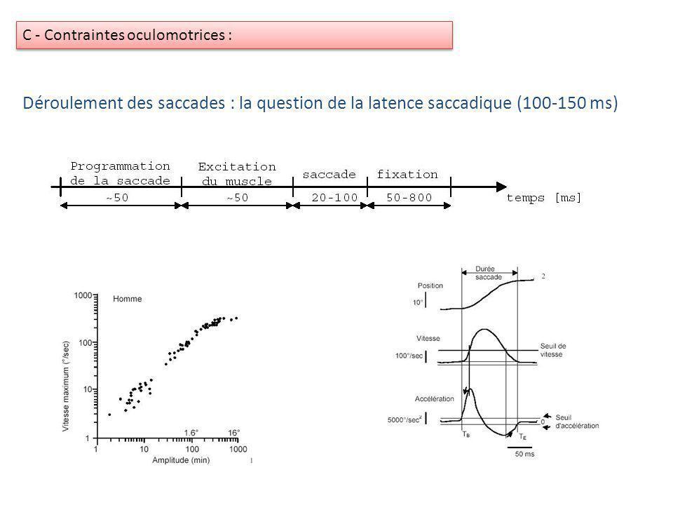 Déroulement des saccades : la question de la latence saccadique (100-150 ms) C - Contraintes oculomotrices :