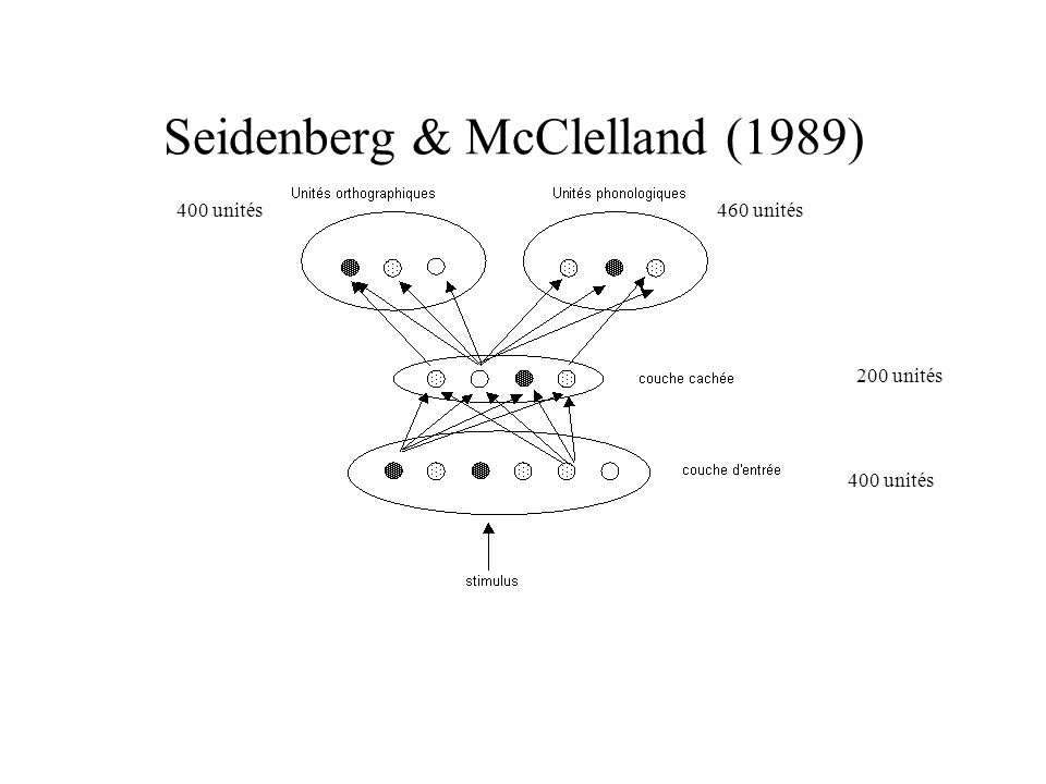 Seidenberg & McClelland (1989) 400 unités 200 unités 460 unités400 unités