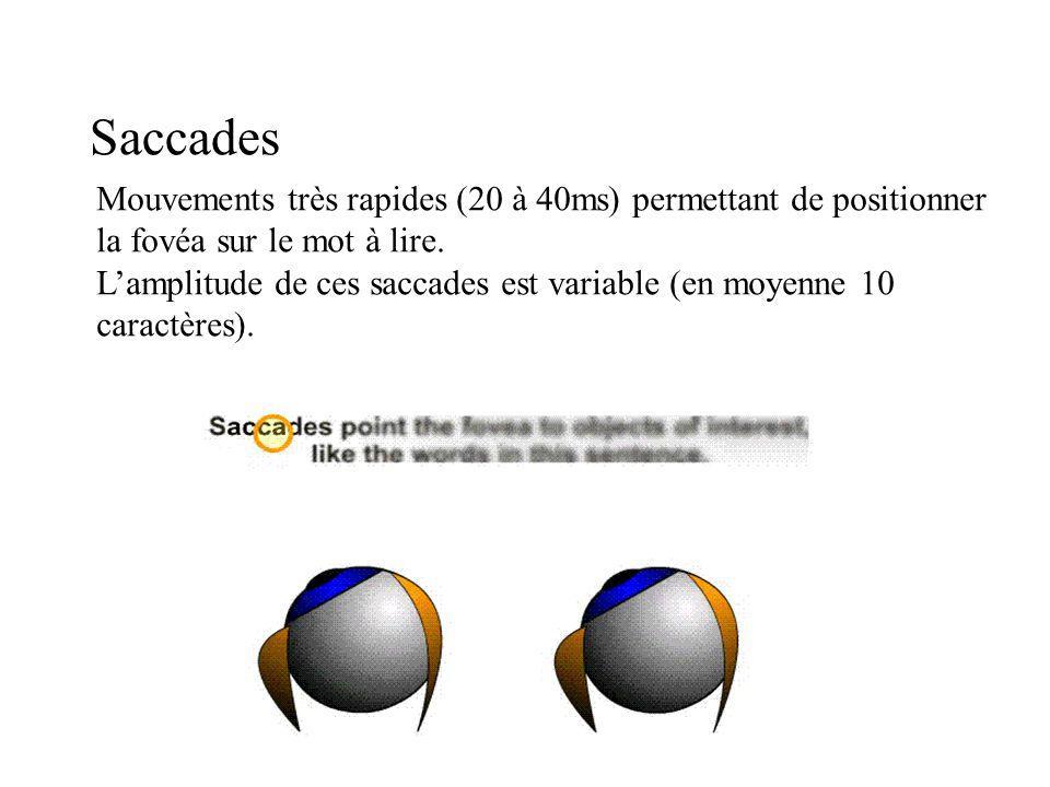Saccades Mouvements très rapides (20 à 40ms) permettant de positionner la fovéa sur le mot à lire. Lamplitude de ces saccades est variable (en moyenne