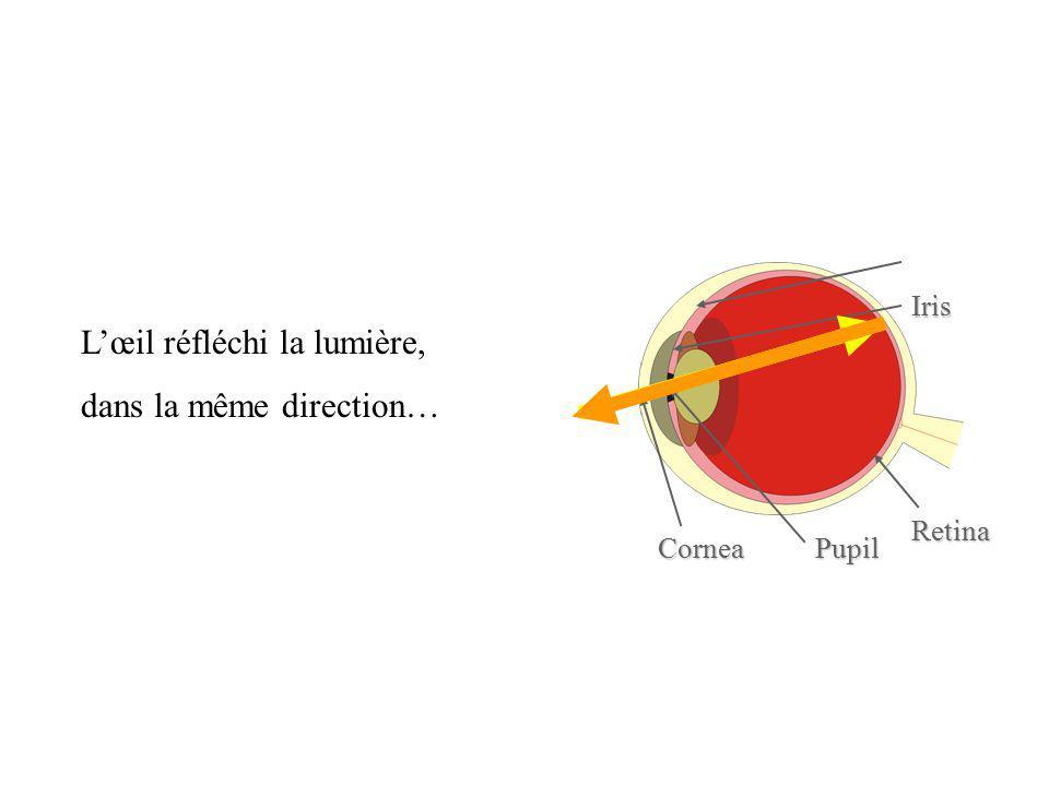 Retina Pupil Iris Cornea Lœil réfléchi la lumière, dans la même direction…