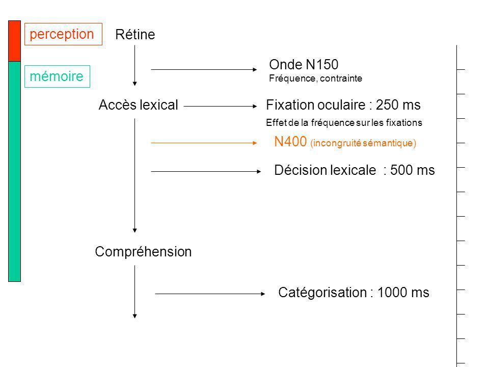Rétine Accès lexical Compréhension perception mémoire Décision lexicale : 500 ms Catégorisation : 1000 ms Fixation oculaire : 250 ms Effet de la fréquence sur les fixations Onde N150 Fréquence, contrainte N400 (incongruité sémantique)