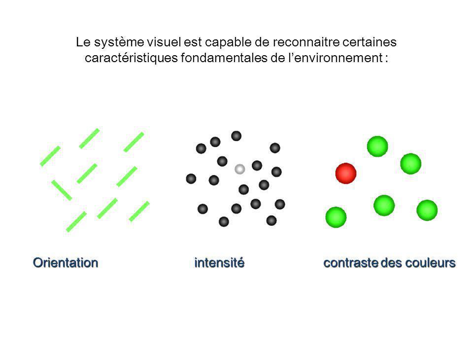 Le système visuel est capable de reconnaitre certaines caractéristiques fondamentales de lenvironnement : Orientation intensité contraste des couleurs