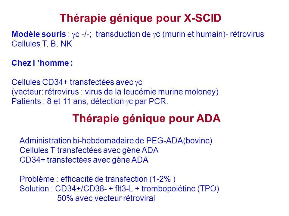 Thérapie génique pour X-SCID Modèle souris : c -/-; transduction de c (murin et humain)- rétrovirus Cellules T, B, NK Chez l homme : Cellules CD34+ tr