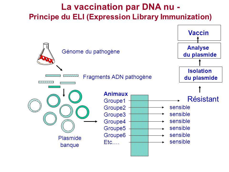 La vaccination par DNA nu - Principe du ELI (Expression Library Immunization) Génome du pathogène Fragments ADN pathogène Plasmide banque Animaux Grou