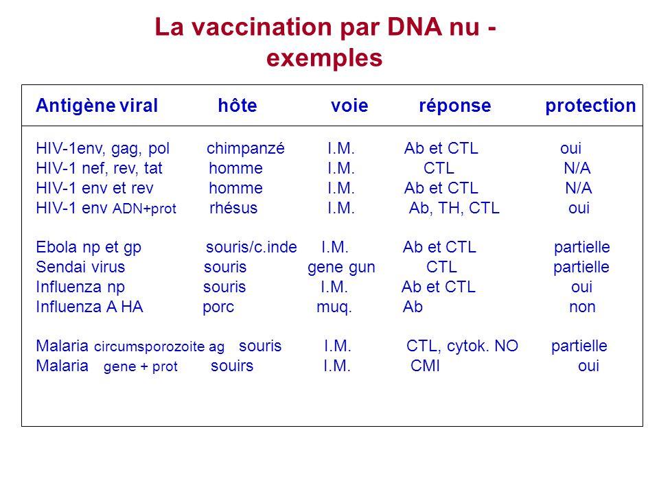 La vaccination par DNA nu - exemples Antigène viral hôte voie réponse protection HIV-1env, gag, pol chimpanzé I.M. Ab et CTL oui HIV-1 nef, rev, tat h