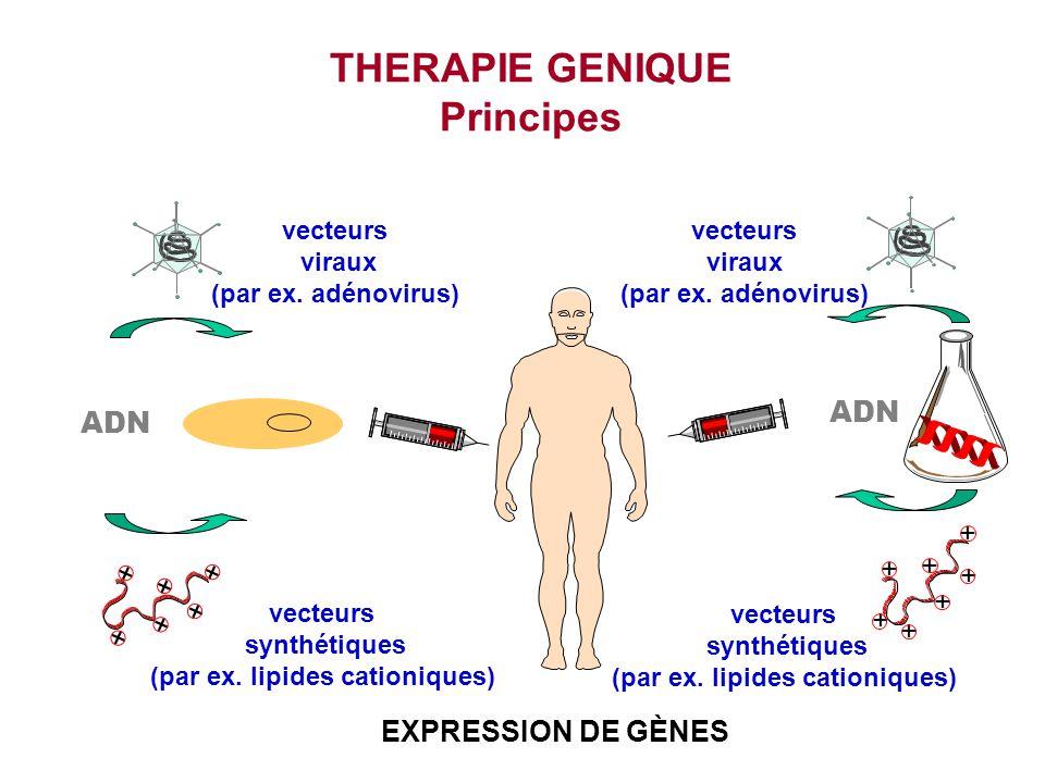 THERAPIE GENIQUE Principes + + + + + + + + + + + + + vecteurs viraux (par ex. adénovirus) vecteurs synthétiques (par ex. lipides cationiques) vecteurs