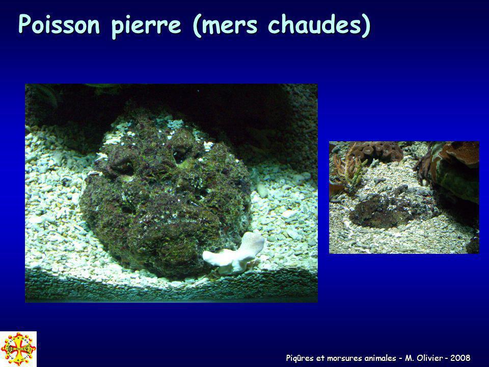 Piqûres et morsures animales - M. Olivier - 2008 Poisson pierre (mers chaudes)