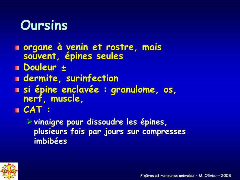 Piqûres et morsures animales - M. Olivier - 2008 Oursins organe à venin et rostre, mais souvent, épines seules Douleur ± dermite, surinfection si épin