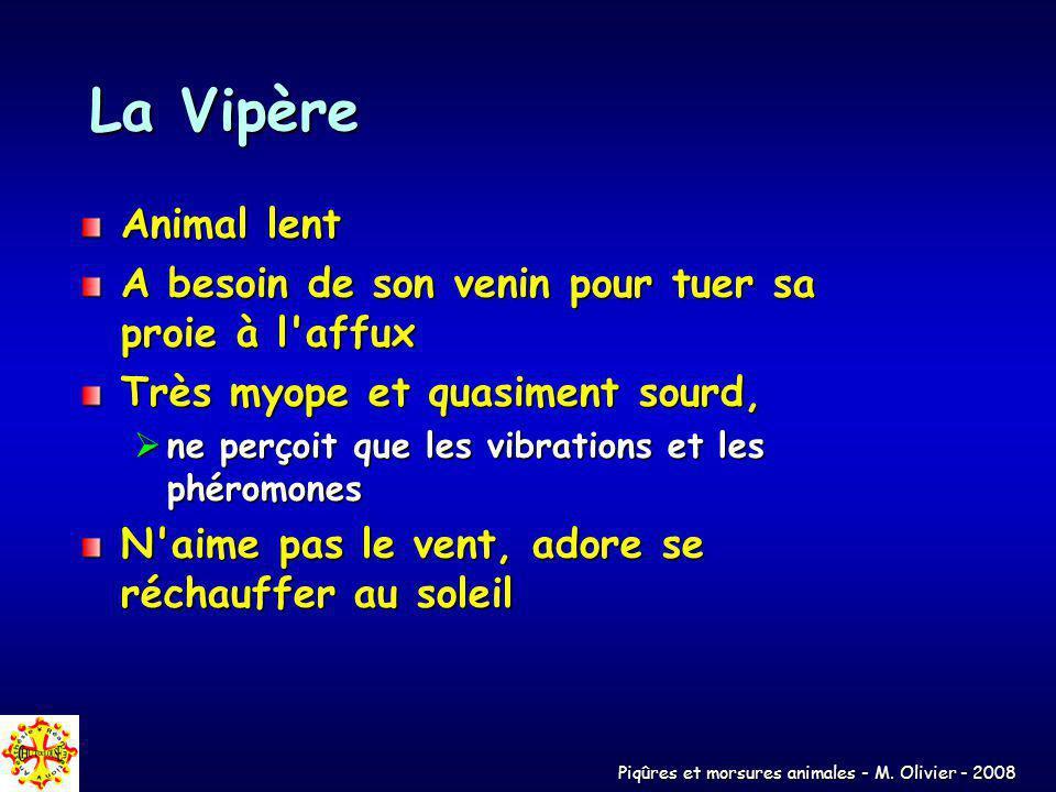 La Vipère Animal lent A besoin de son venin pour tuer sa proie à l'affux Très myope et quasiment sourd, ne perçoit que les vibrations et les phéromone