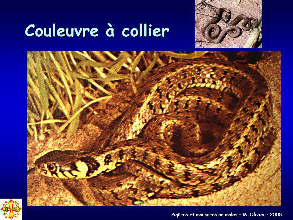 Piqûres et morsures animales - M. Olivier - 2008 Couleuvre à collier
